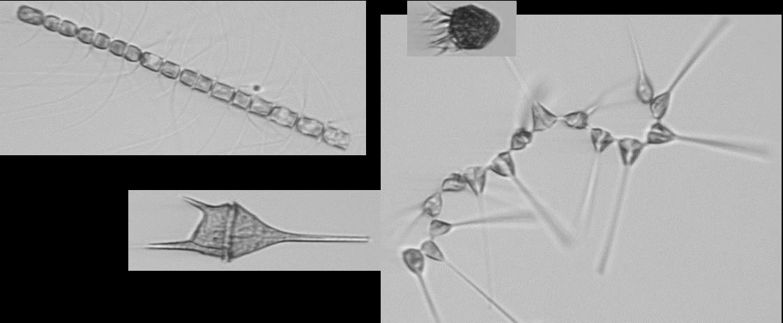 Plankton workshop 2-2